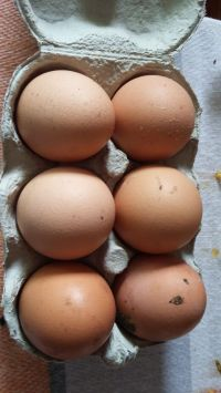 Angie's fresh farm eggs orders taken!